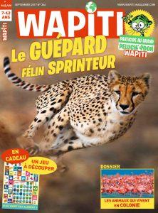 Wapiti guépard sprinter